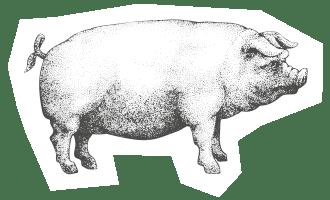 icona-benessere-animale_allevamento